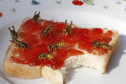 wespen auf marmeladentoast