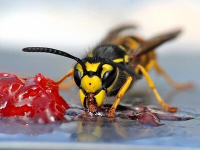wespen vertreiben im sommer