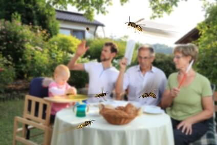 mittel gegen wespen bei wespenplage