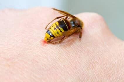 hornissenstich in hand