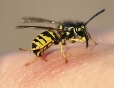 Wespenspray Und Wespenschaum Die Top Produkte
